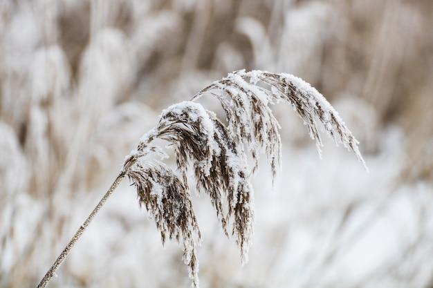 Nahaufnahmeaufnahme einer mit schnee bedeckten pflanze Kostenlose Fotos