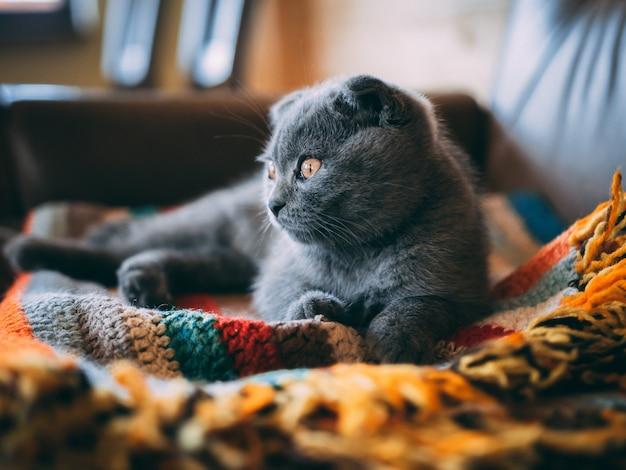 Nahaufnahmeaufnahme einer niedlichen grauen katze, die auf einer bunten decke im raum während des tages sitzt Kostenlose Fotos