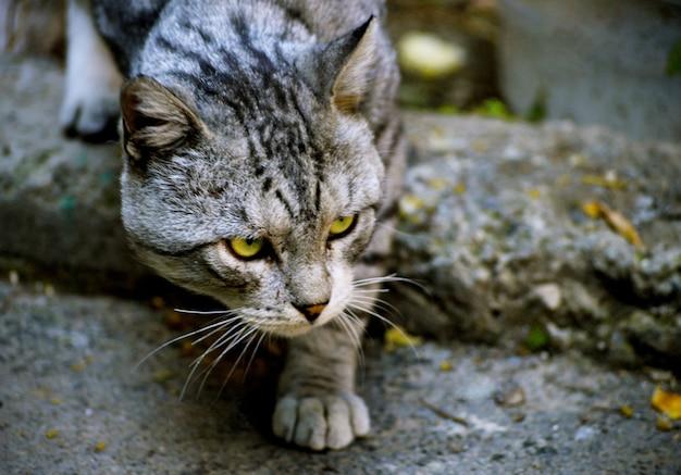 Nahaufnahmeaufnahme einer streunenden obdachlosen katze mit einem bestimmten niedlichen gesicht in eriwan, armenien Kostenlose Fotos