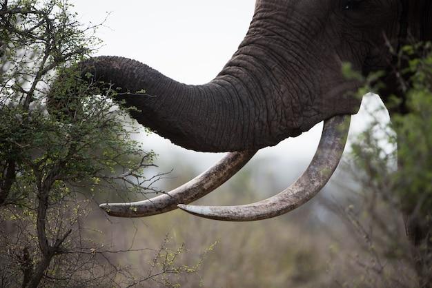 Nahaufnahmeaufnahme eines afrikanischen elefanten, der pflanzen isst Kostenlose Fotos