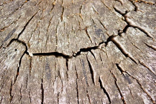 Nahaufnahmeaufnahme eines alten geschnittenen hölzernen baumes im wald Kostenlose Fotos