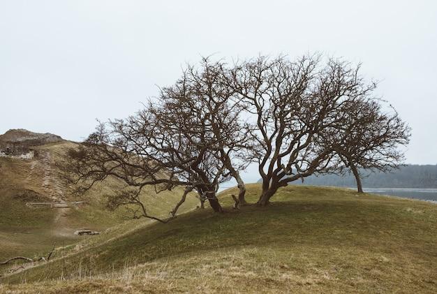 Nahaufnahmeaufnahme eines baumes auf einer grünen landschaft unter einem klaren himmel Kostenlose Fotos