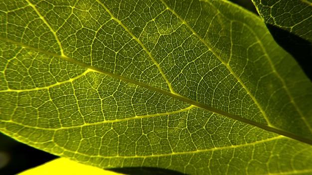 Nahaufnahmeaufnahme eines frischen grüns lassen textur Kostenlose Fotos