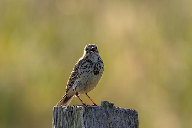 Nahaufnahmeaufnahme eines kleinen vogels, der auf einem stück trockenem holz hinter einem grün sitzt Kostenlose Fotos