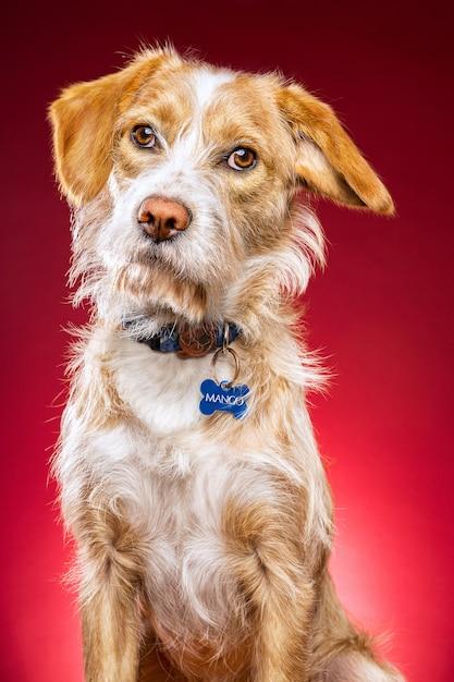 Nahaufnahmeaufnahme eines niedlichen hundes auf einem roten hintergrund Kostenlose Fotos