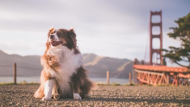 Nahaufnahmeaufnahme eines niedlichen hundes, der auf dem boden an einem sonnigen tag nahe einem see und einer brücke sitzt Kostenlose Fotos