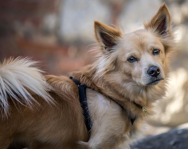 Nahaufnahmeaufnahme eines niedlichen hundes, der die kamera mit einem unscharfen hintergrund betrachtet Kostenlose Fotos