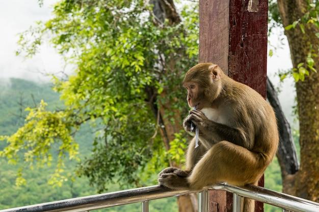 Nahaufnahmeaufnahme eines rhesus-makaken-primatenaffen, der auf einem metallgeländer sitzt und etwas isst Kostenlose Fotos