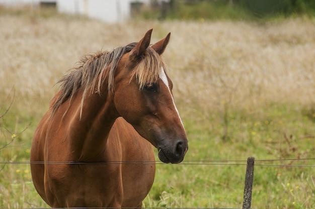 Nahaufnahmeaufnahme eines schönen braunen pferdes mit einem edlen blick, der auf dem feld steht Kostenlose Fotos