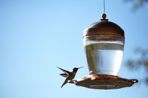 Nahaufnahmeaufnahme eines schönen kolibris, der auf einer lampe sitzt Kostenlose Fotos