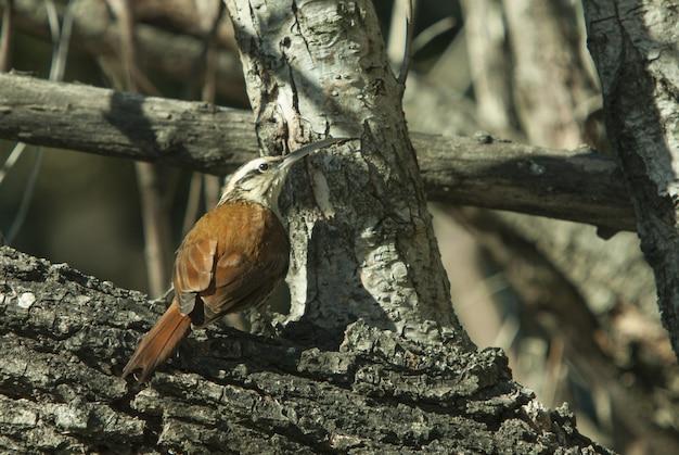 Nahaufnahmeaufnahme eines schönen vogels mit einem großen schnabel, der auf einem hölzernen stamm sitzt Kostenlose Fotos