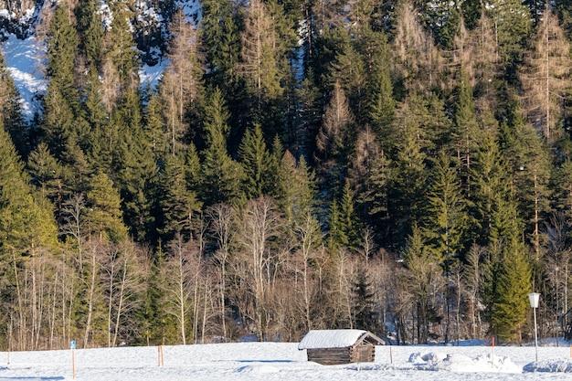 Nahaufnahmeaufnahme eines waldes voller bäume hinter einer kleinen hütte im winter Kostenlose Fotos
