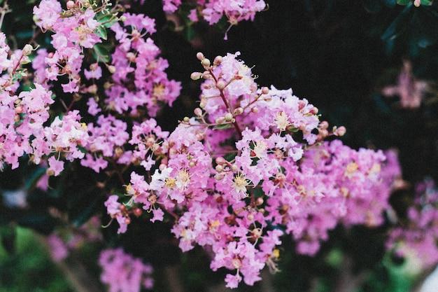 Nahaufnahmeaufnahme eines zweigs der kleinen lila blumen, die nebeneinander wachsen Kostenlose Fotos