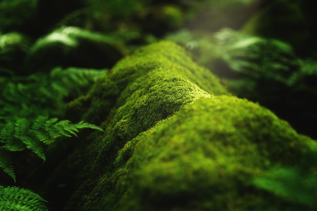 Nahaufnahmeaufnahme von moos und pflanzen, die auf einem baumast im wald wachsen Kostenlose Fotos
