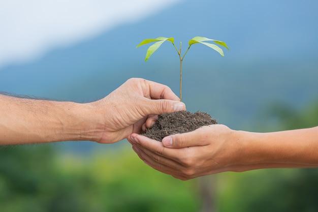 Nahaufnahmebild der hand, die den schössling der pflanze zu einer anderen hand übergibt Kostenlose Fotos