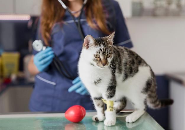 Nahaufnahmedoktor mit stethoskop und verletzter katze Kostenlose Fotos