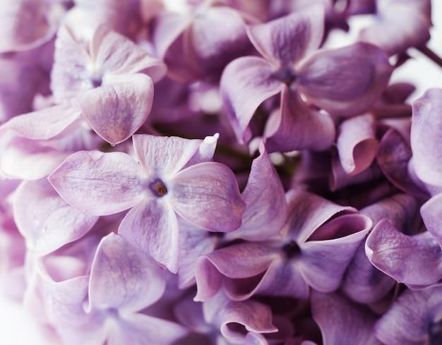Nahaufnahmefoto von schönen lila blumen. Premium Fotos