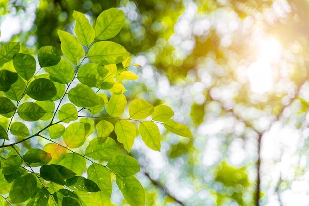 Nahaufnahmegrünblätter mit sonnenlicht in forrest. neuer natürlicher hintergrund. Premium Fotos