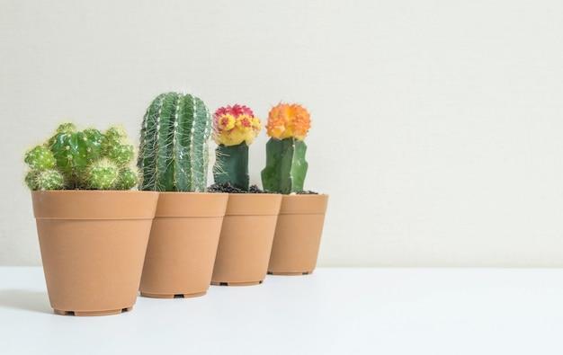 Nahaufnahmegruppe des schönen kaktus im braunen plastiktopf für verzieren auf unscharfem weißem hölzernem schreibtisch Premium Fotos