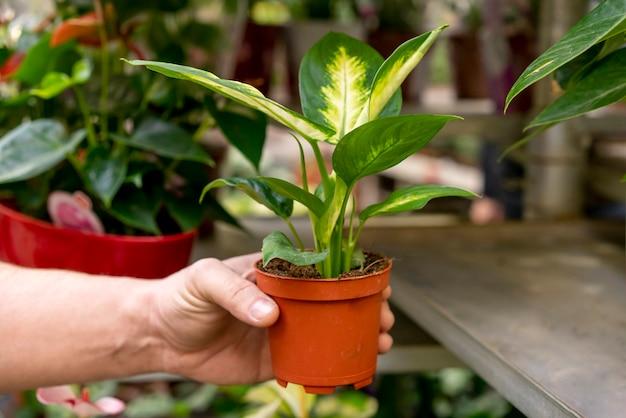 Nahaufnahmehand, die elegante pflanze hält Kostenlose Fotos