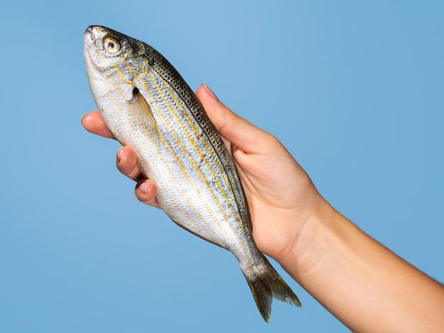 Nahaufnahmehand, die rohen fisch hält Kostenlose Fotos
