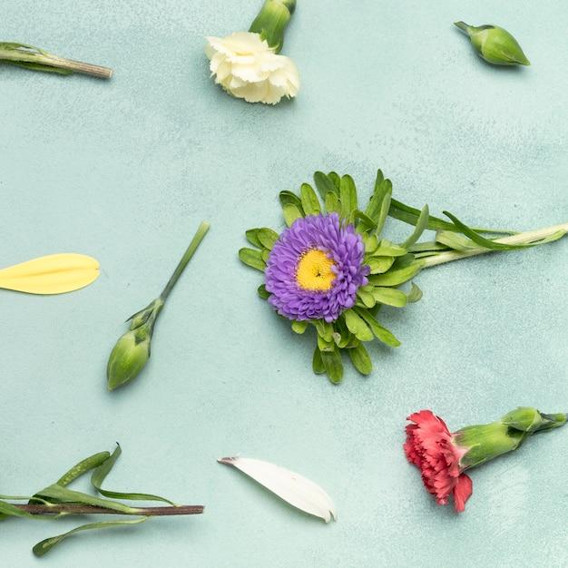 Nahaufnahmehintergrund mit gänseblümchen und gartennelkenblumen Kostenlose Fotos