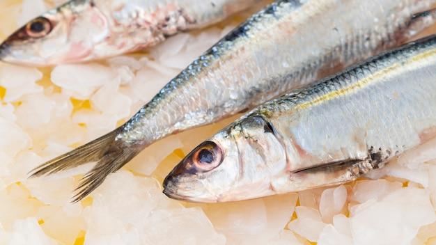 Nahaufnahmemakrelenfische auf eiswürfeln Kostenlose Fotos