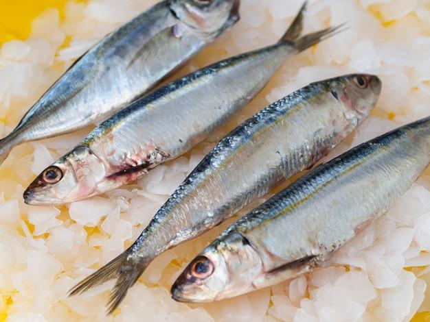 Nahaufnahmepaare von makrelen auf eis Kostenlose Fotos