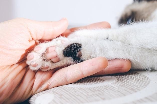 Nahaufnahmeschuss einer menschlichen hand, die die pfote eines kätzchens hält Kostenlose Fotos
