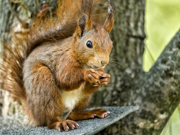 Nahaufnahmeschuss eines eichhörnchens auf dem ast unter dem sonnenlicht Kostenlose Fotos