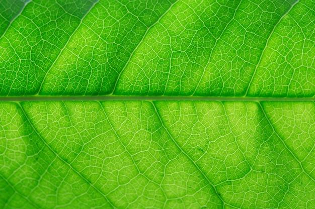 Nahes hohes des grünen blattes. grünes blatt makro. Premium Fotos