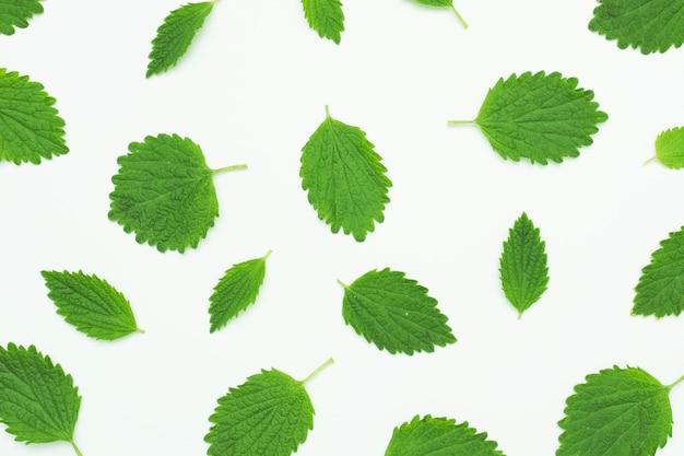 Nahtloses muster mit grünem frischem blatt auf weißem hintergrund Premium Fotos