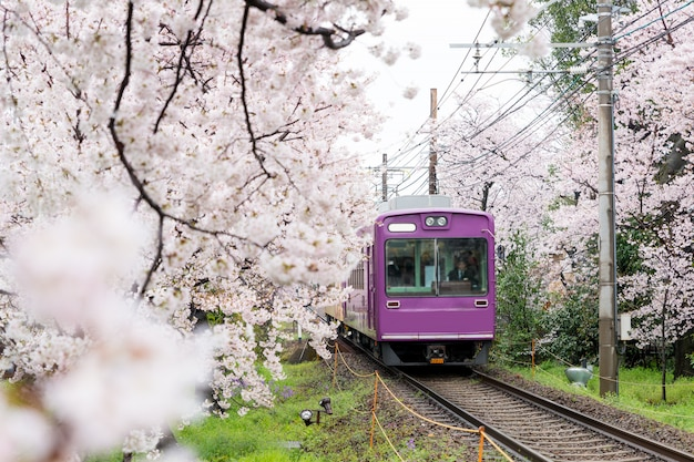Nahverkehrszug, der auf schienen mit kirschblüten entlang der eisenbahn in kyoto, japan reist. Premium Fotos