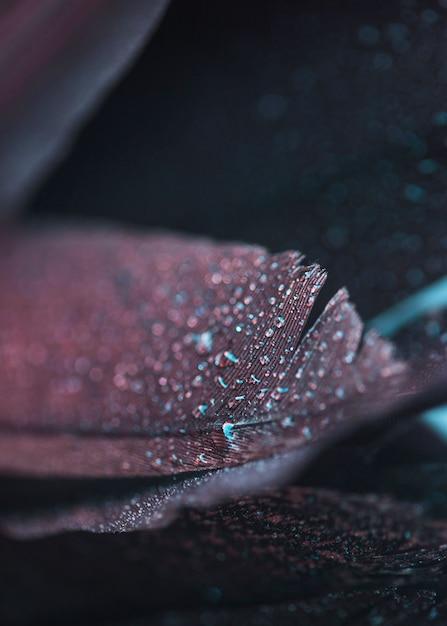 Nasse frische schöne bunte feder auf strukturiertem hintergrund Kostenlose Fotos