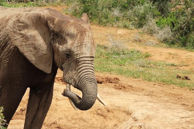 Nasser und schlammiger elefant, der in einer wasserpfütze im dschungel herumspielt Kostenlose Fotos