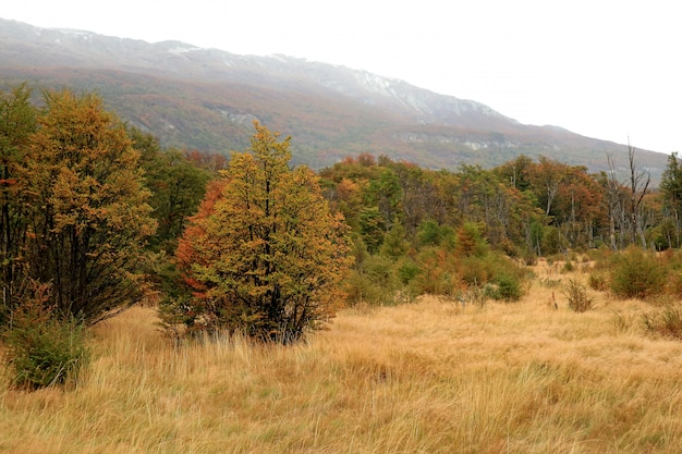 Nationalpark tierra del fuego im herbst, patagonia, argentinien, südamerika Premium Fotos