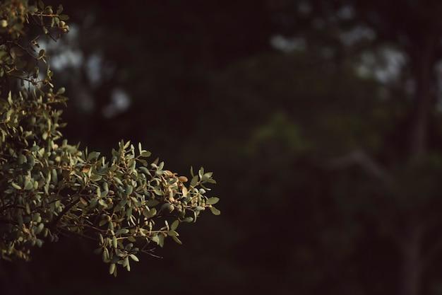 Natürliche grünblätter mit defocused hintergrund Kostenlose Fotos