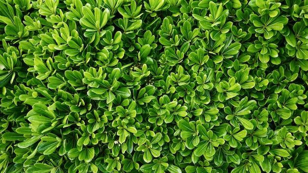 Natürliche grüne pflanzenblätter Premium Fotos