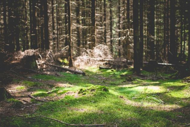 Natürliche grünen teppich Kostenlose Fotos