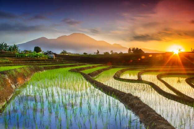 Natürliche porträts von reisfeldern und bergen in ländlichen gebieten indonesiens mit sonnenaufgang und grünem morgentau in asien Premium Fotos