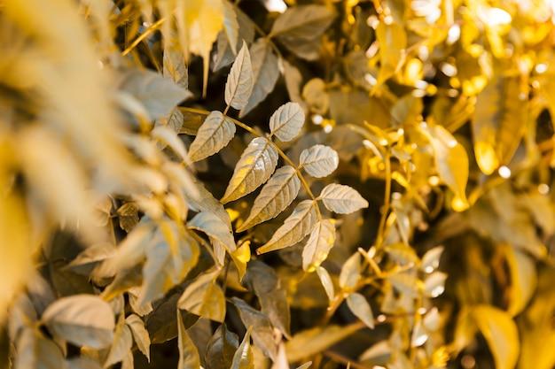 Natürliche vegetationsbeschaffenheit Kostenlose Fotos