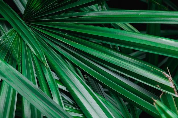 Natürlicher hintergrund von grünen palmblättern Premium Fotos