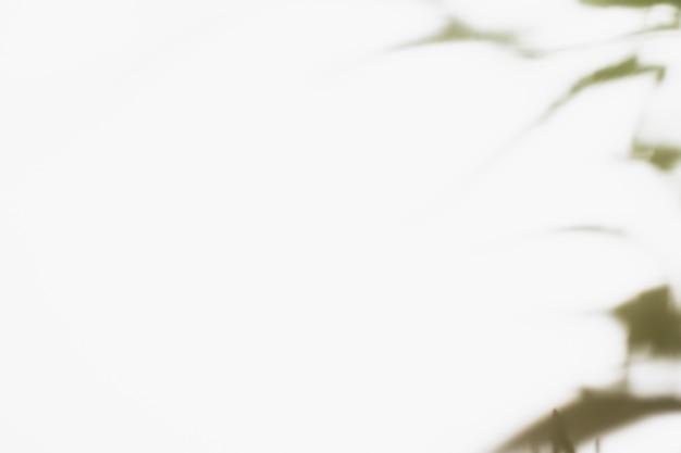 Natürlicher palmblattschatten Kostenlose Fotos