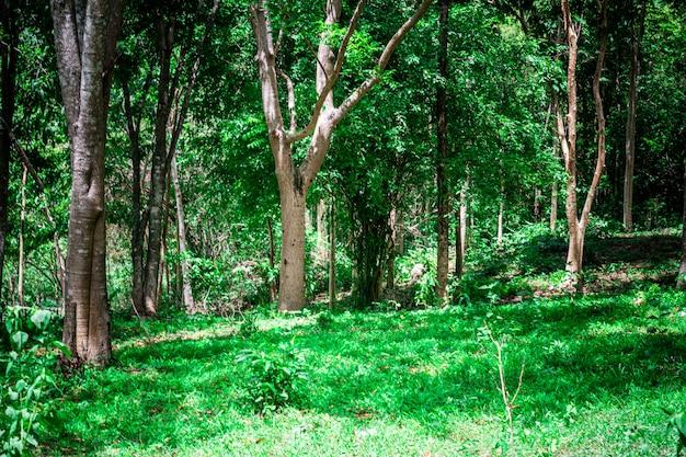 Natürlicher regenwald in südostasien. Premium Fotos