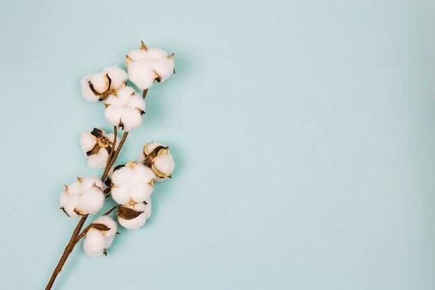 Natürlicher stamm von baumwollblumen gegen farbigen hintergrund Kostenlose Fotos
