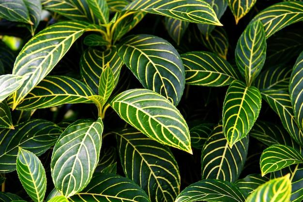 Natürliches grünes blattmuster Premium Fotos
