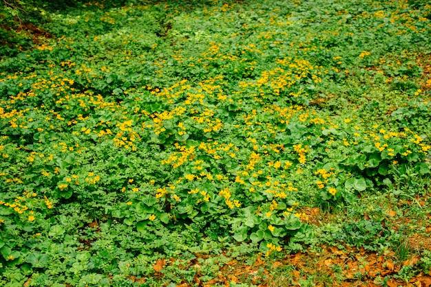 Natur, frühling, gras, dorf. ländliche spur. es kann als hintergrund verwendet werden Premium Fotos