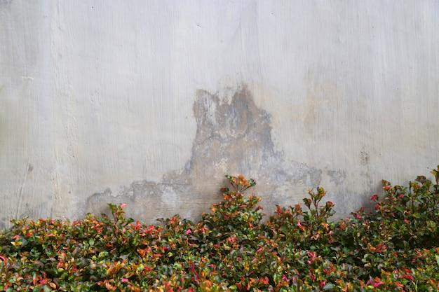 Natur hintergrundvorlage Premium Fotos
