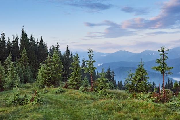 Nebelige karpatengebirgslandschaft mit tannenwald, die baumkronen ragen aus dem nebel heraus. Kostenlose Fotos