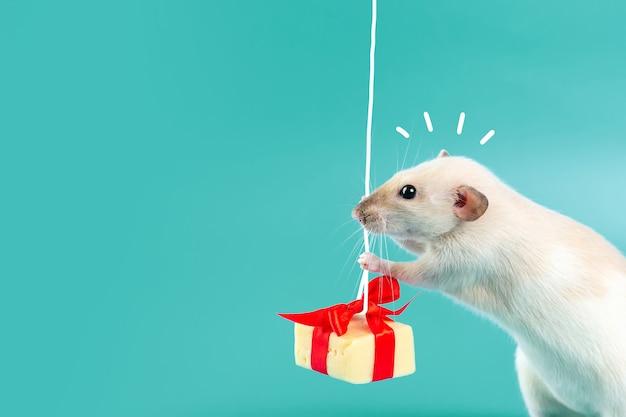Nette dekorative ratte mit käsegeschenk und rotem bogen Premium Fotos
